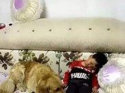 金毛发现小主人在沙发上睡着了,接下来做的事暖心到不行!