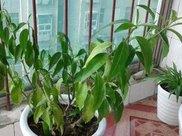 植物黄叶的原因你还不知道?难怪你的植物老是死掉!