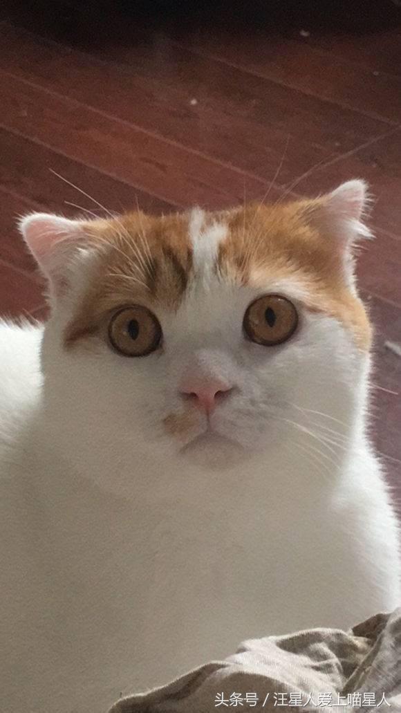 壁纸 动物 猫 猫咪 小猫 桌面 580_1031 竖版 竖屏 手机