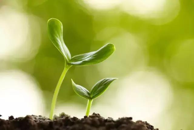 一个人就像是一粒种子,天生就有发芽的欲望.
