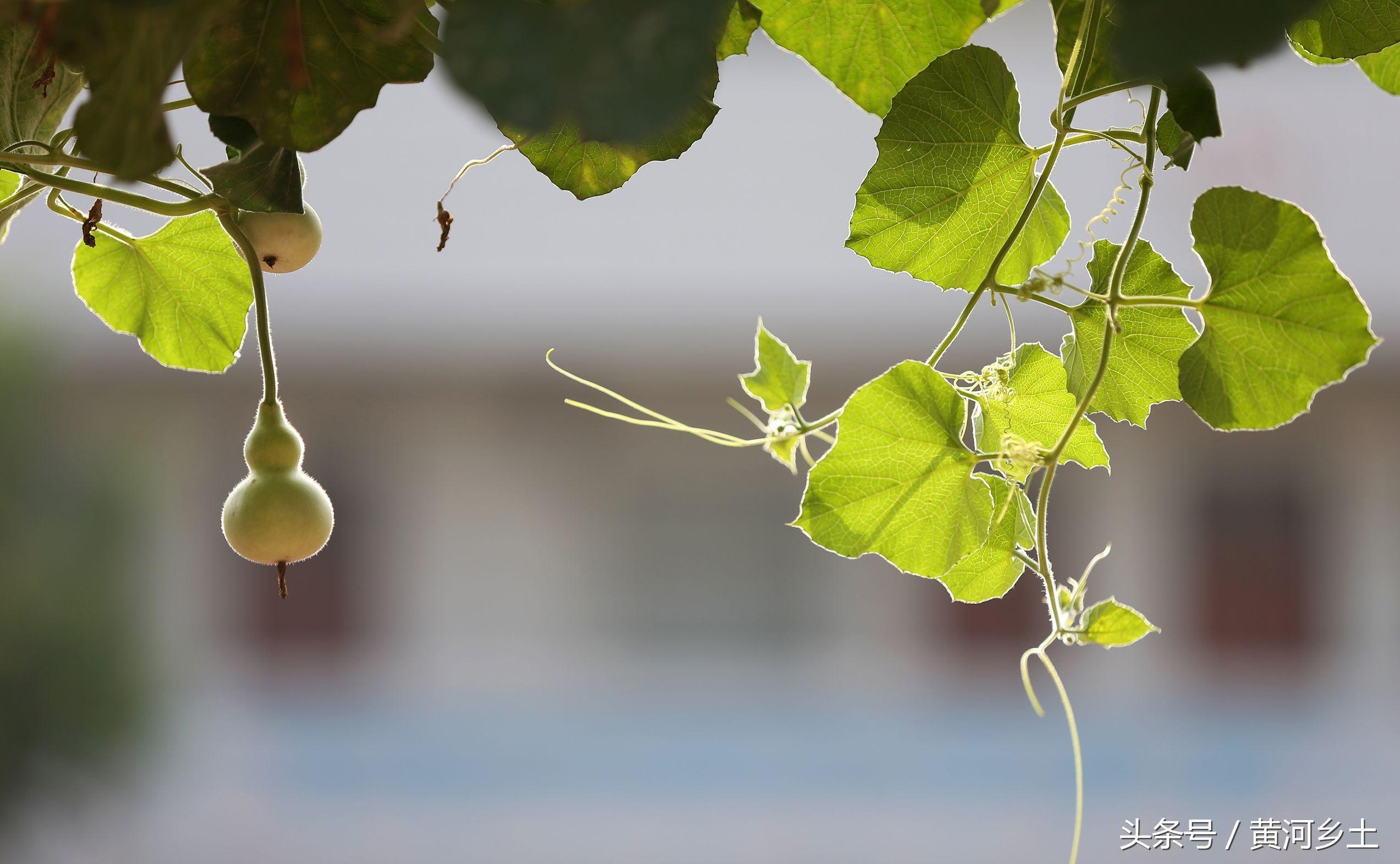 山西小学生在奥数里丢了几粒葫芦籽,不料却长小学花池思路图片