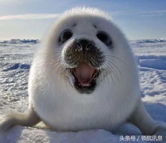 """澳大利亚再添一种动物泛滥,渔民都被气哭了!都是""""可爱"""
