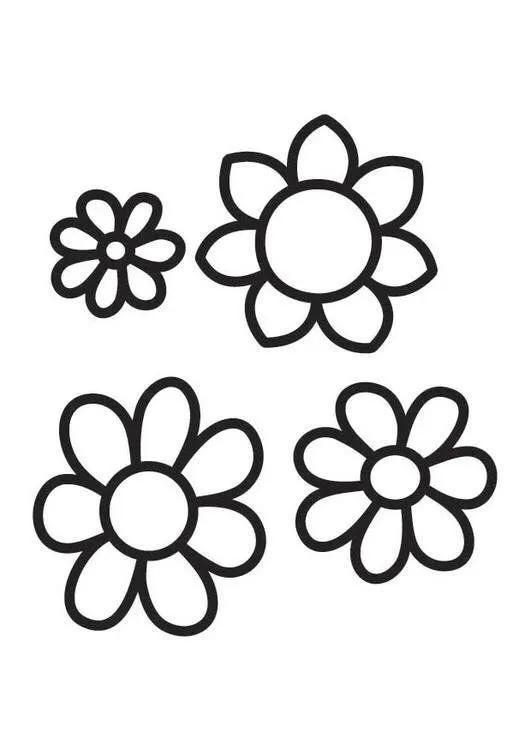 适合零基础小白学画的花卉简笔画教程