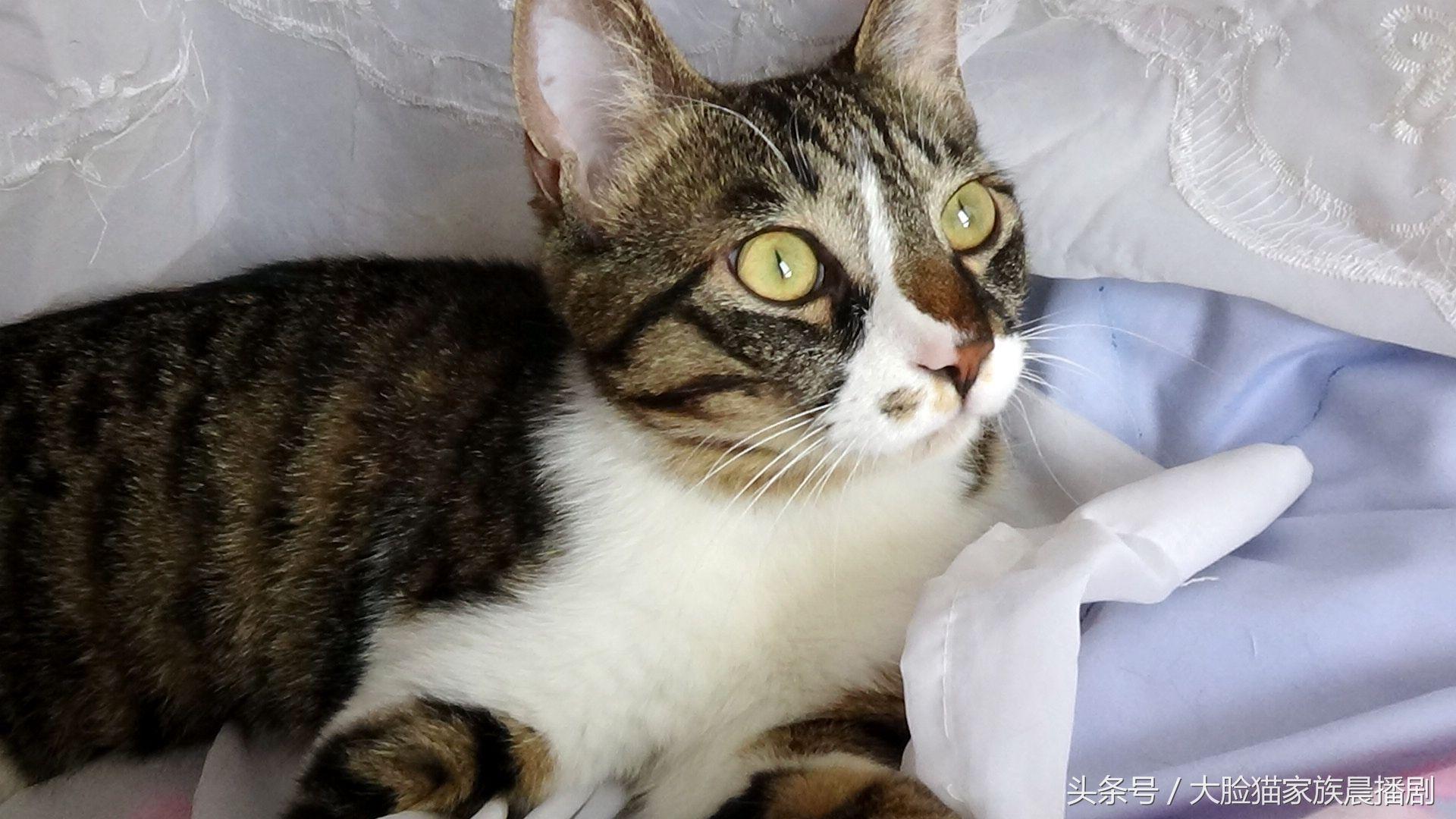 大脸猫家族电脑屏保21张,喜欢猫咪的亲抱走吧,欢迎做头条头像哦