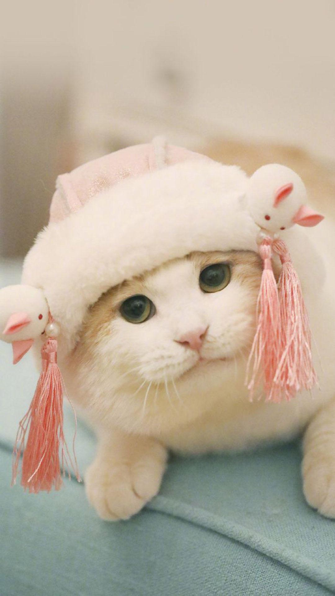 动物篇 肥嘟嘟可爱软萌猫咪图片 手机壁纸