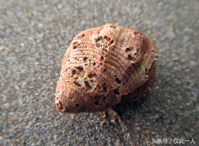 日本福岛核泄漏后,海洋生物变异,这些食物别再吃了