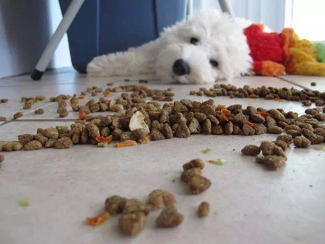 狗狗吃饭时奇怪的小动作,你知道代表什么吗?做个懂狗的好主人