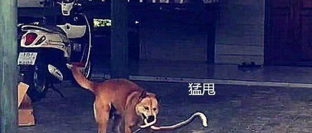 女子听到狗狗怒吼声出门看到这一幕立马拎着扫把出了门