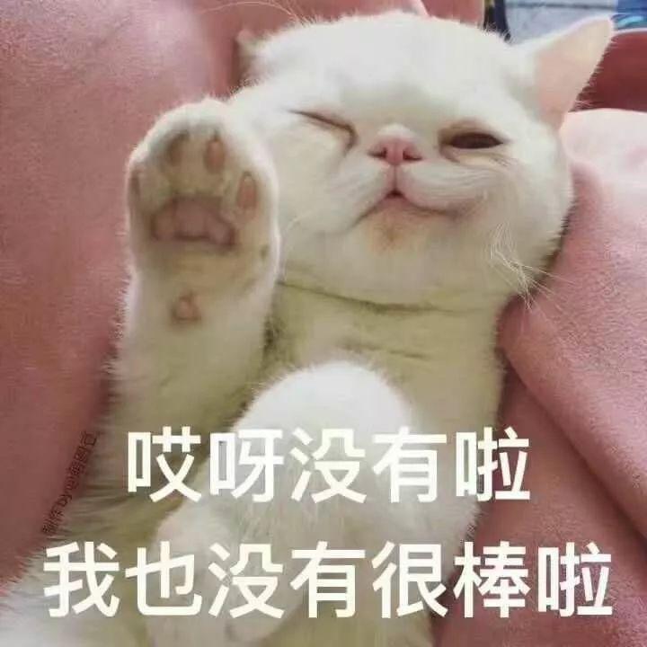 很多人聊天都喜欢用猫咪表情?包直腰理情表壮叉气图片