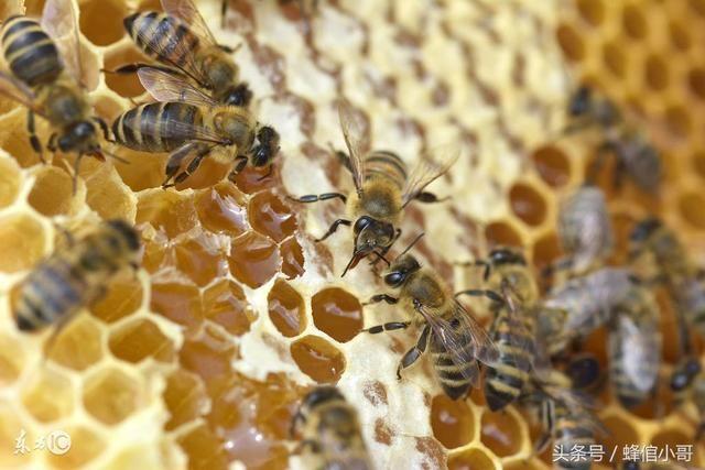 二:它是蜜蜂用来修补巢穴所分泌的一种物质,可以让狭小的蜂巢 清洁