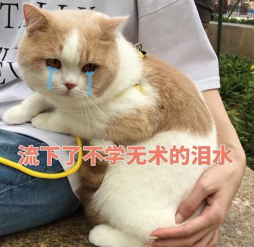 傲娇不好猫咪:生气了,哄教授的那种搞笑图表情图片