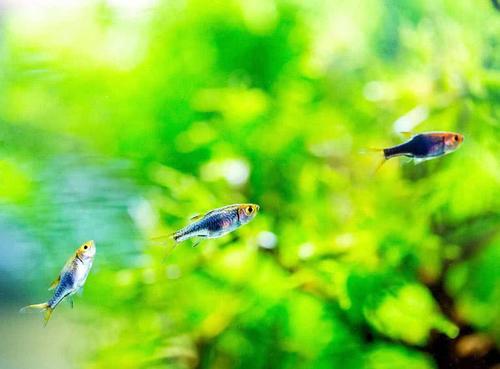 清点南北方适合饲养观赏鱼种类北方最好别养这些观赏鱼