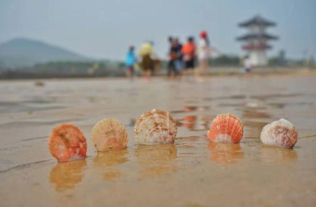七月的青岛拒绝下美食,萌娃、比基尼有更加选草鱼图饺子图片