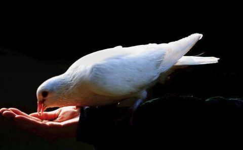 蔷薇美丽网|想要变美多喝鸽子汤女人必吃的养颜汤推荐