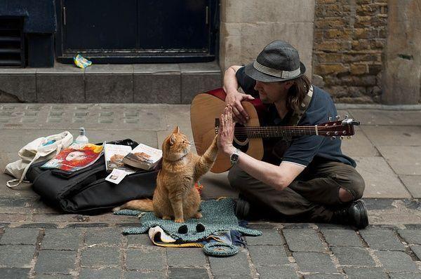 《流浪猫Bob》以真实故事改编,不言而喻的温情却瞬间治愈人心