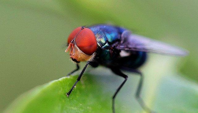 """苍蝇停在食物上,为什么要先""""搓脚""""?网友:看完整个人都不好了"""