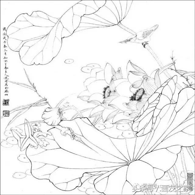 工笔素材丨李晓明工笔花鸟白描,喜欢快收藏!