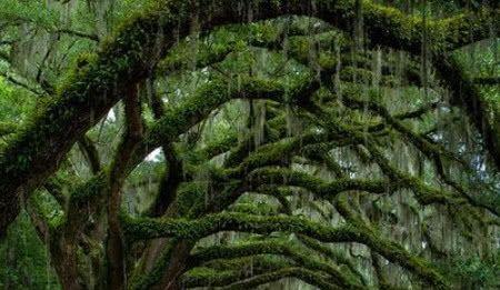 <b>这里有中国最著名的树,你是不是来过这里呢?看看神奇的树!</b>