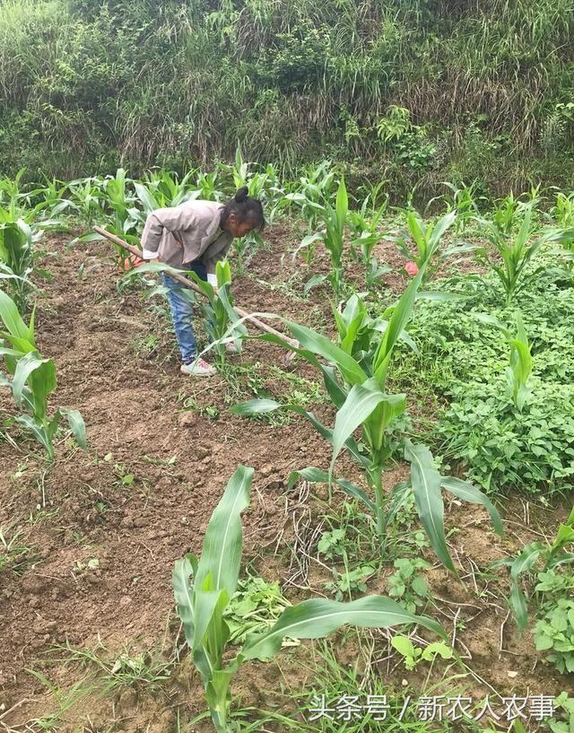 农民的艰辛只有在农村生活过的人才能体会得到