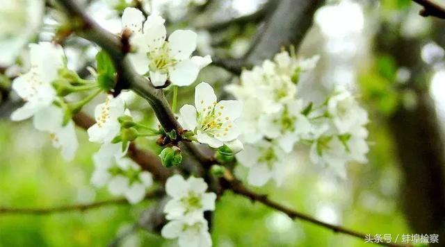 拼接在情致里的梨花,意境a情致、诗词缠绵开情趣内衣的盛开奶露胸图片