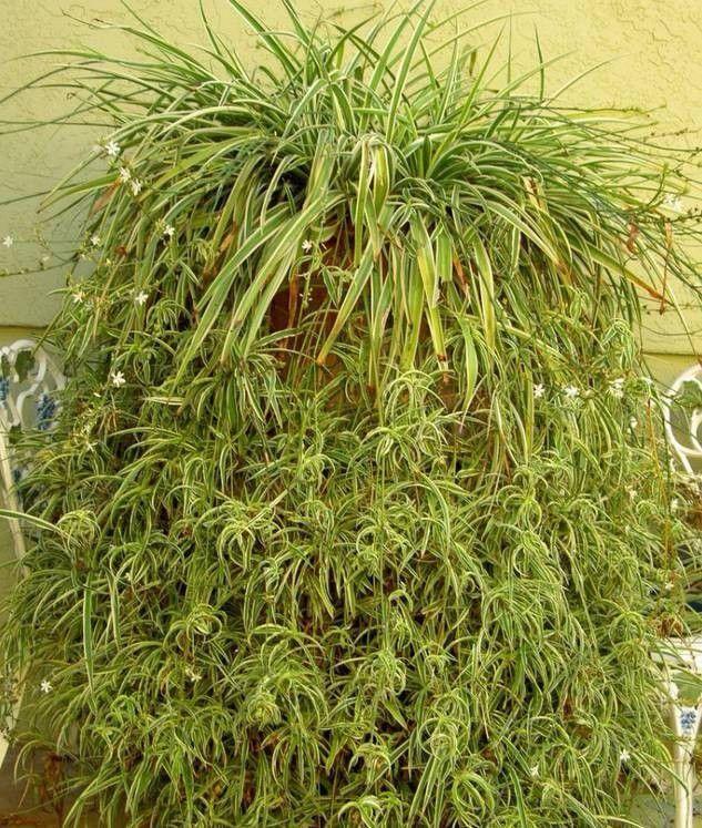 这些花卉一下子就可以繁殖很多盆,分株培育出来的侧芽太多咋办?