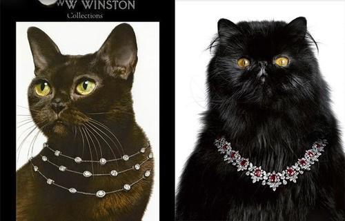 萌宠来袭,看它们怎么给珠宝打广告