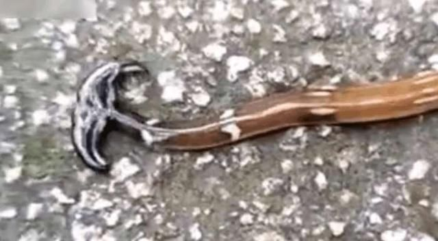 男子无意间发现双头蛇, 刚要跑却感觉不对劲, 马上用手机拍下