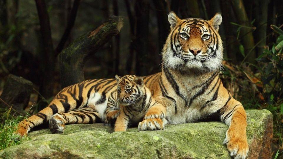 9种出生不久的猫科动物宝宝,你最想带走哪一只?