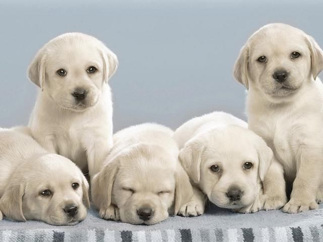 幼犬身体弱,需要注意的有很多,关乎到狗狗未来的健康发育
