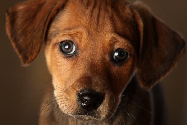 不是所有狗狗都爱被摸,特别是这5种情况,主人摸它可能也会被咬