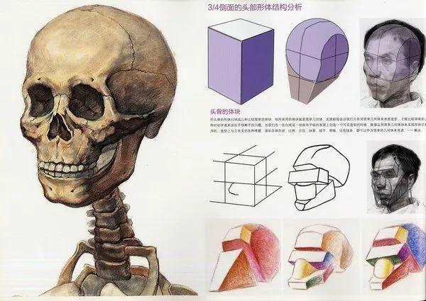 3. 通过明暗、虚实关系加强对头像形体的塑造,进一步理解肌肉与肌肉的穿插及包裹关系。 4. 用富有表现力的线条加强对石膏头像形体的塑造,用严谨的态度着力描绘骨骼、肌肉的组织关系。简化暗部的细节,同时做到不含糊、体积透彻。要重点刻画前面的细节,削弱后面的层次,整体关系一定要做到主次分明。 5.