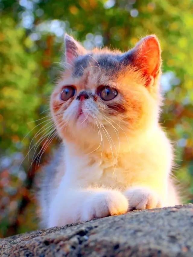 加菲猫:虽然我又懒又胖,可我就是在全世界都受欢迎呀