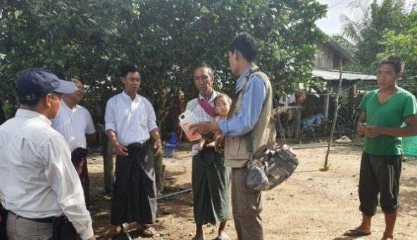 缅甸边境河里出现大量死猪,政府紧急捞猪填埋