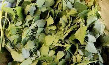 灰菜图片 灰菜的功效与作用_蔬菜知识_做法,功效与作用,营养...