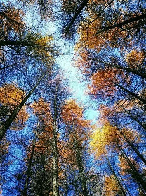 秋天的大自然,秋色一定很美,写一写吧我喜欢炎热的夏天,但我更喜欢