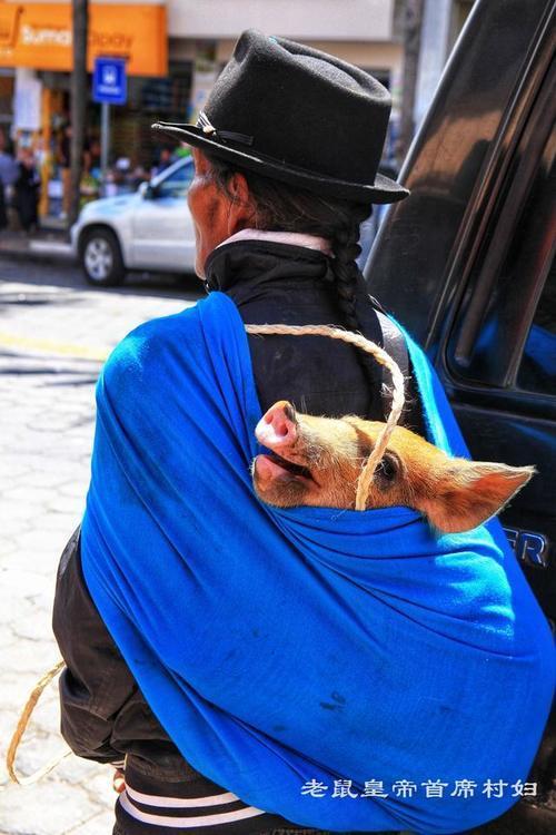 揭秘厄瓜多��牲畜市�鲐i背著�u�u抱在�牙镔u小草泥�R也�u