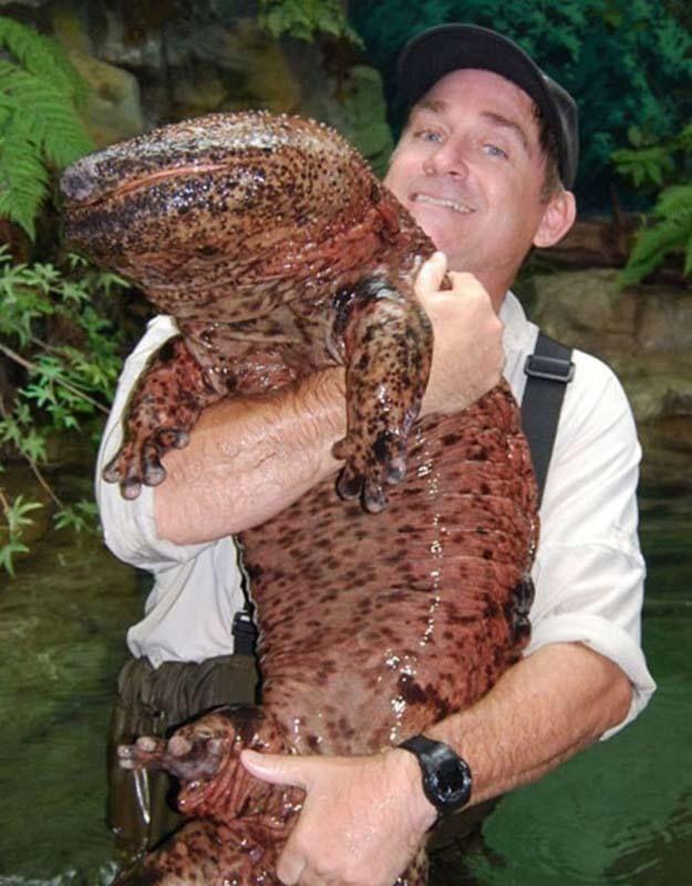 世界上最恐怖的变异生物,它们体型巨大的让人害怕