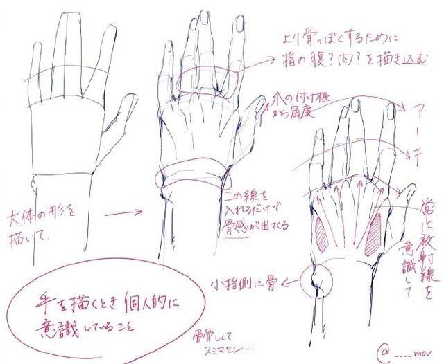 手部结构图片大全
