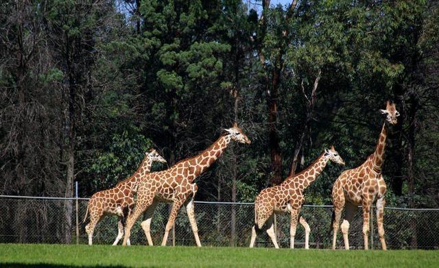 动物园,因为小孩子的世界其实是比较简单的,让他们看一看这些有趣的