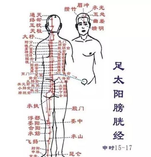 十四条经络简介(收藏版)