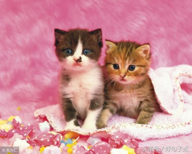可爱猫咪晚安图片大全可爱