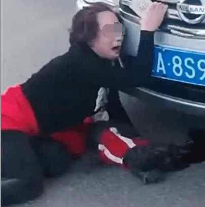 宠物狗从美女掉落1砸在阳台动漫美女吊带袜的车上,接下来狗主图片