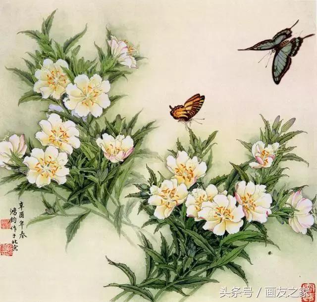 国画花鸟画教程:工笔画蝴蝶白描上色步骤!