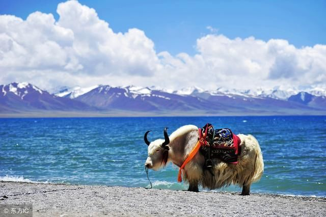 藏区的夏天风景图片
