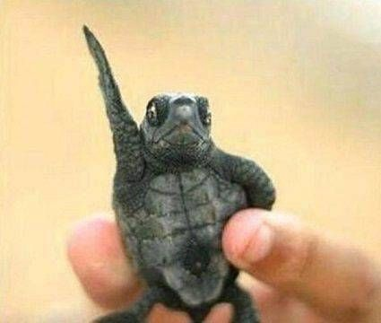 男子意外捡到小乌龟表情包从此生活不一样图片