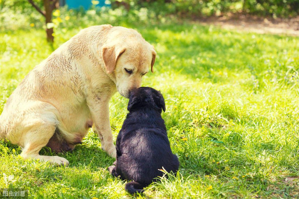 狗狗互相碰鼻子,只是打招呼而已吗?其实还问了你吃啥