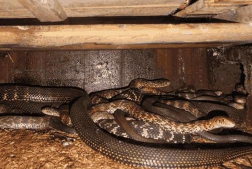 动物 蛇 500_335