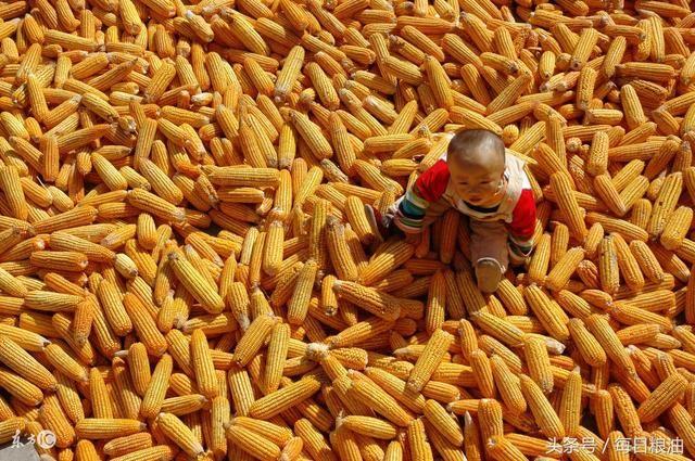 涨涨涨!嘉吉生化连续上调玉米收购价格!