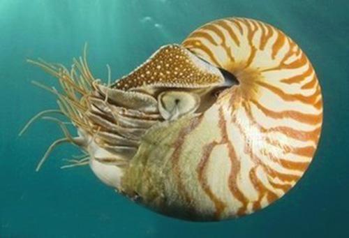 地球上现存最古老的动物是什么?或伏在珊瑚礁及岩石上.