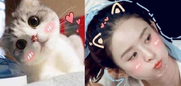 撞脸动物表情的明星:李易峰赵丽颖的样子绝对萌到你